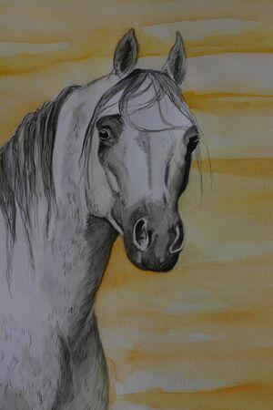 aquarel: A portrait in watercolour paints of a young arabian stallion