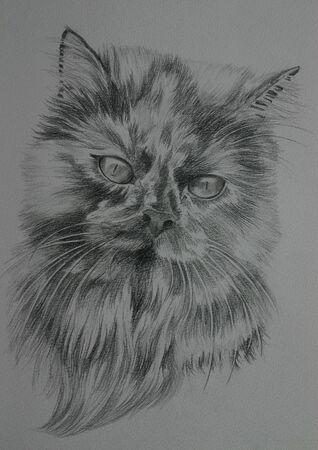 美しいペルシャ猫の黒と白の肖像画 写真素材