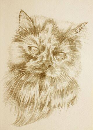 セピア色のトーンで美しいペルシャ猫の肖像画 写真素材