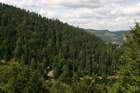 A lake with large pinetrees in the Vosges, French photo