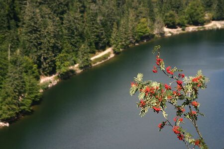 A lake taken from high on the mountain, orange berries in front photo