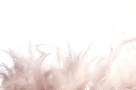 A border made of white feathers on a white background