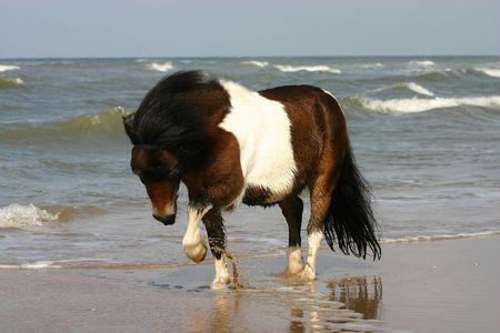 Een kleine baai en witte pony spelen met de zee