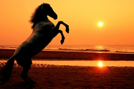 A rearing horse on the beach at sunset - photomanipulation photo