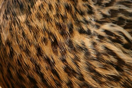 The feathers of a female duck close-up, beautiful coat pattern Imagens