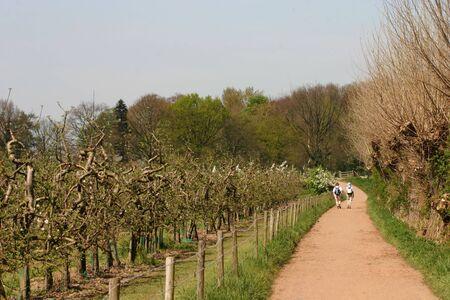 senioren wandelen: Twee actieve senioren lopen door de boomgaarden Stockfoto