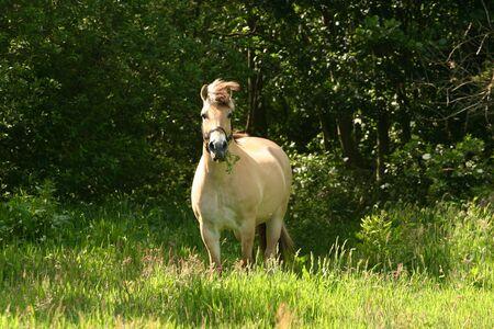 A beautiful horse grazing in a green meadow. photo
