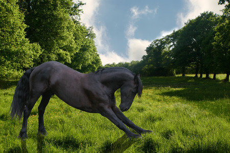 A horse bowing down in a bright green field