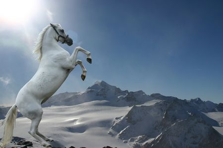 rearing: A grey horse rearing against a bright mountain background. Stock Photo