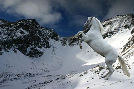 rearing: A grey horse rearing in a snowy winter landscape.