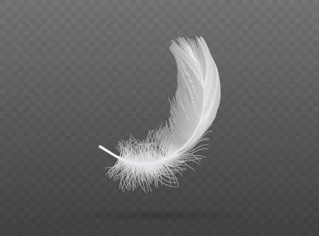 light falling white bird feather vector