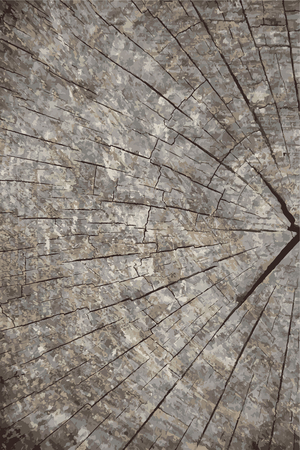 textur: Vector grunge texture background. Natural wooden texture backdrop.