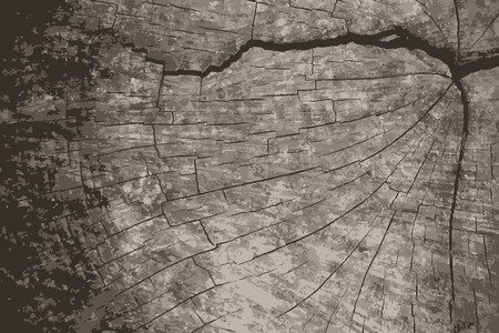 textur: A Vector grunge texture background.Natural wooden texture backdrop.