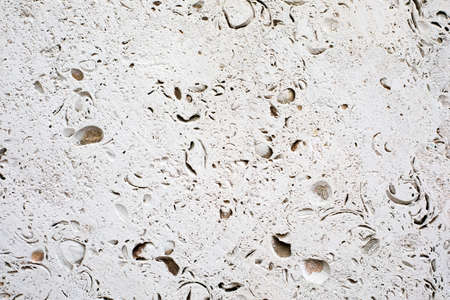 Shell rock texture. Natural stone background.