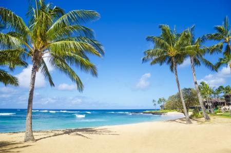 Kokos Palmboom op het zand Poipu strand in Hawaï, Kauai