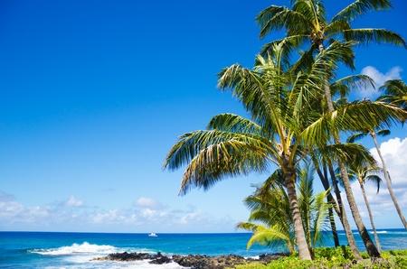 Coconut Palm boom door de oceaan in Hawaï, Kauai Stockfoto