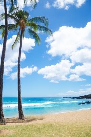 Coconut Palm tree on the sandy Poipu beach in Hawaii, Kauai