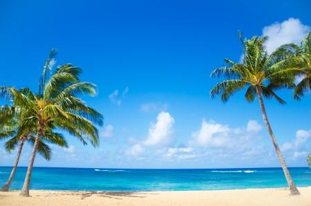 Kokosnoot Palmboom op het zand Poipu strand in Hawaï, Kauai