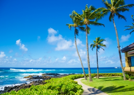 Coconut Palm tree by the ocean in Hawaii, Kauai photo