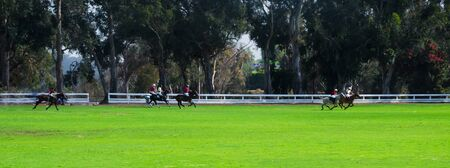 Polol players are riding horses in summer day