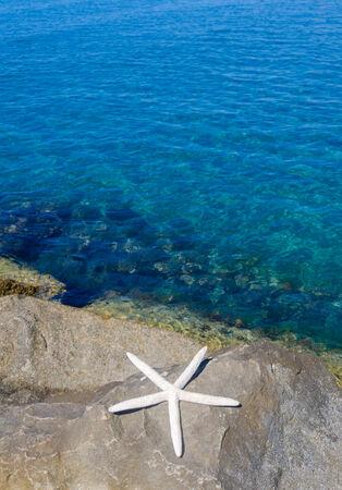 limassol: Starfish by the Mediterranean Sea, Cyprus, Limassol Stock Photo