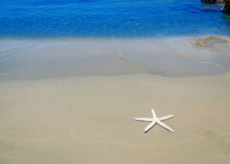 Starfish by the Mediterranean Sea, Cyprus, Limassol photo