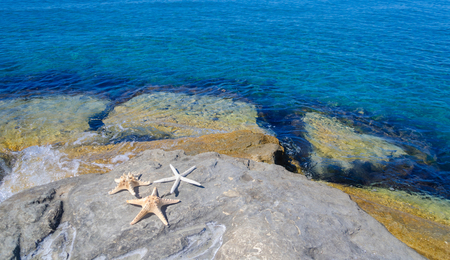 Three starfishes next to sea, Cyprus, Limassol photo