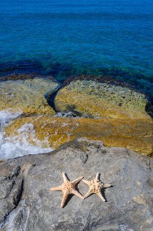 Two starfishes next to sea, Cyprus, Limassol