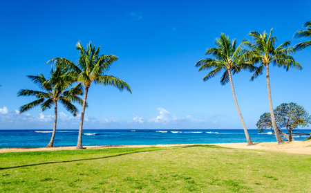 Cococnut Palm bomen op het zand Poipu strand in Hawaï, Kauai