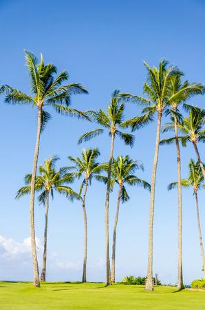 kauai: Cococnut Palm trees on the Poipu beach in Hawaii, Kauai Stock Photo