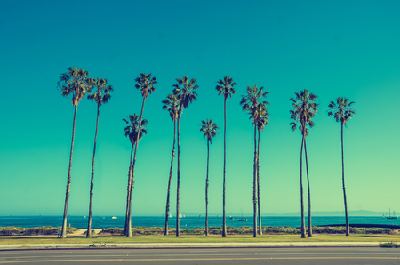 California high palm trees oon the beach near the ocean, blue sky background, vintage toned and stylized, retro style, Santa Barbara Stock Photo