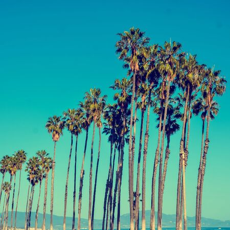 California high palm trees on the blue sky  background, vintage toned and stylized, retro style, Santa Barbara, square, Instagram format