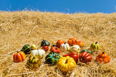 Herbst Ernte Gemuse Auf Der Wiese Herbst Thanksgiving Hintergrund
