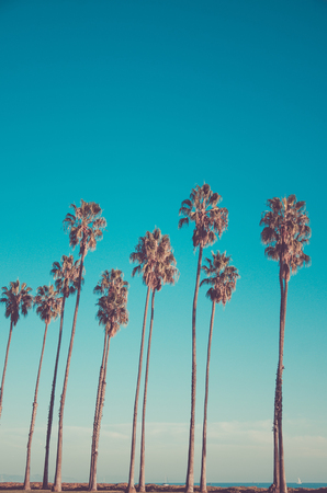 California high palm trees on the beach near the ocean, blue sky background, vintage toned and stylized, retro style, Santa Barbara