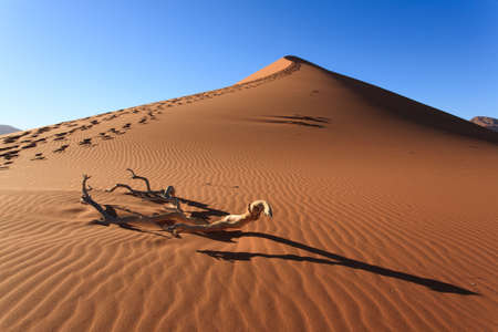 kalahari desert: Red dune on the road to Sossusvlei, Namibia