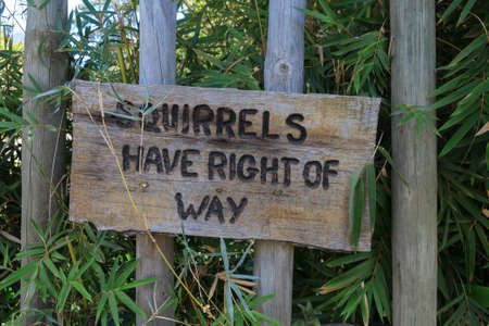 precedence: Attection the Right of squirrels