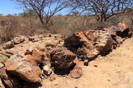 mineralized: Petrified tree from Khorixas, Namibia Stock Photo