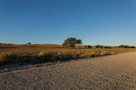 south africa soil: A view from Kgalagadi Transfontier Park, South Africa