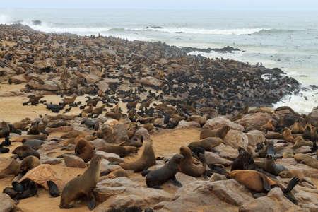 Kolonie zeehonden van Cape Point, Namibië