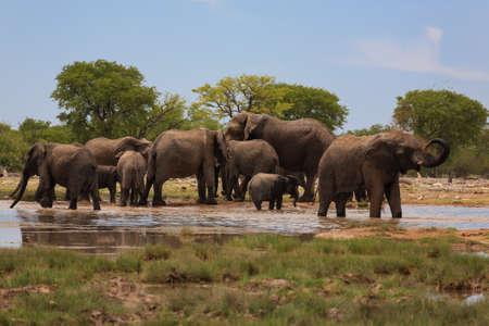 pozo de agua: Manada de elefantes del Parque Nacional de Etosha, Namibia