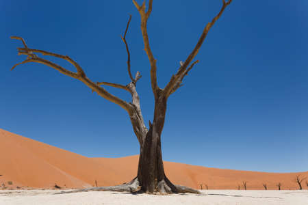desolated: A view from Dead Vlei, Sossusvlei Namibia Stock Photo