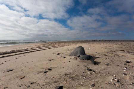 shoreline: Shoreline panorama desde Costa de los Esqueletos, Namibia