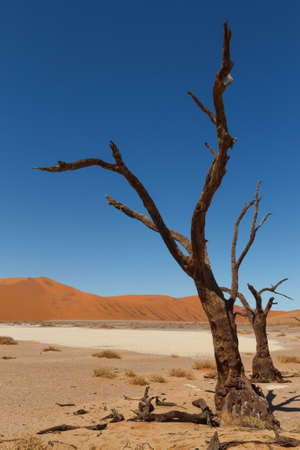 vlei: Death tree with red dunes from Hidden Vlei, Sossusvlei Namibia Stock Photo