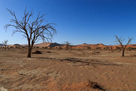 vlei: Death tree with red dunes from Hidden Vlei Sossusvlei Namibia