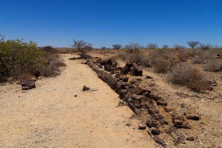 mineralized: Petrified tree from Khorixas Namibia