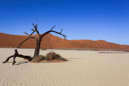 burchell: Death tree with red dunes from Hidden Vlei Sossusvlei Namibia