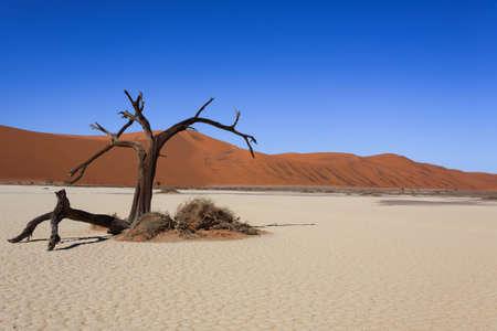 muerte: �rbol de la muerte de dunas rojas de Hidden Vlei Namibia Sossusvlei Foto de archivo