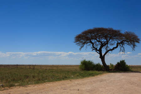 burchell: Panorama from Etosha National Park Namibia