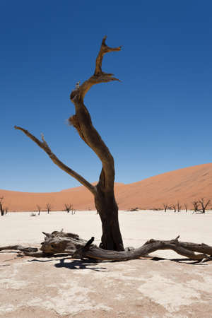 vlei: A view from Dead Vlei Sossusvlei Namibia
