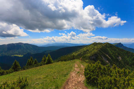 mugo: Panorama from Italian alps, mugo pines along a mountain trekking path